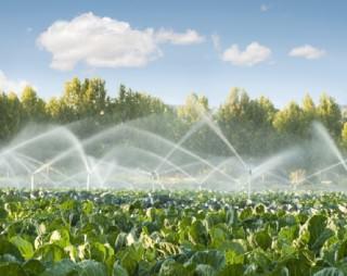 acqua e agricoltura