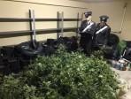 Zen: scoperta piantagione sotterranea di marijuana, in corso accertamenti