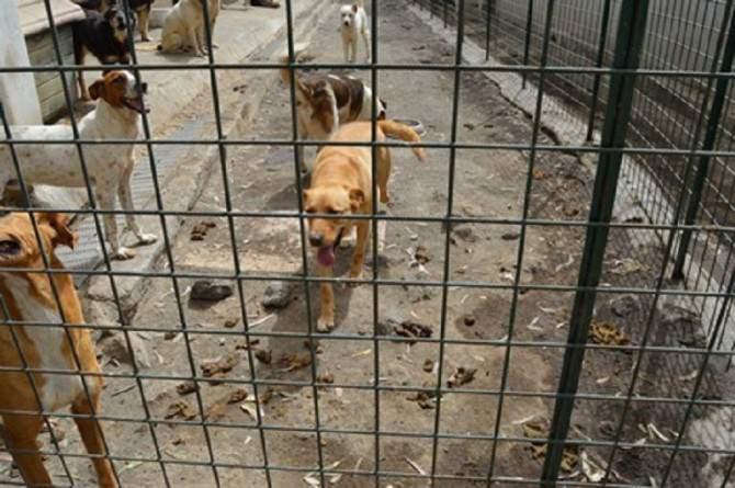 Oltre 500 animali abbandonati tra le feci e senza cure mediche: indagate 3 persone