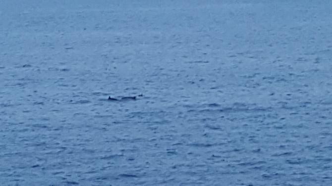 Corsa alla ringhiera del lungomare di Catania: delfini mai così vicini