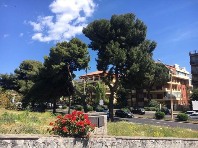 Periferie catanesi necessitano di cura del verde urbano e potatura alberi