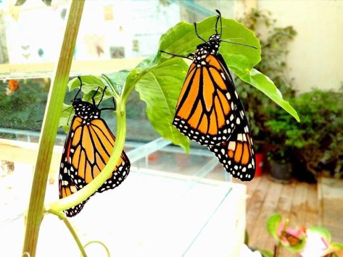 """""""Casa delle farfalle"""" ultimi giorni per stare a contatto con farfalle tropicali e con il loro habitat"""