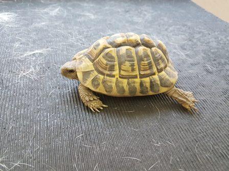 Animali privi di acqua e cibo e sofferenti per il caldo for Cibo tartarughe acqua