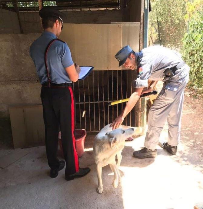 """Scoperto un canile abusivo allo Zen di Palermo, 22 cani ospitati in una struttura """"fantasma"""". LE FOTO"""