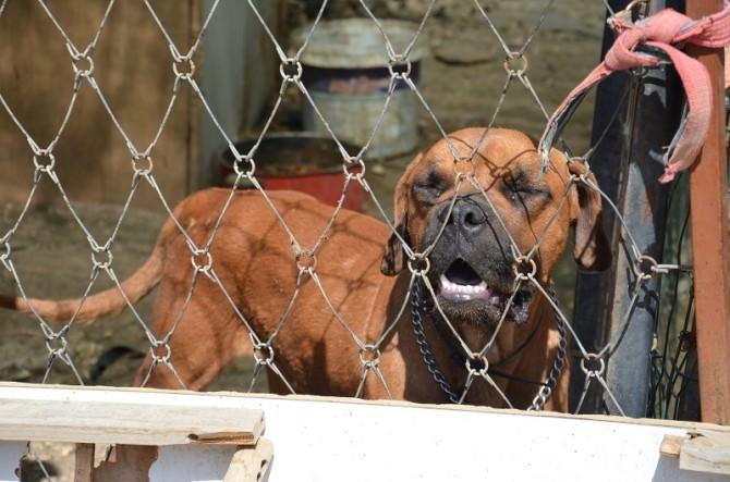 Cani in pessime condizioni igieniche, parte il sequestro: nel mirino un uomo di 30 anni. LE FOTO
