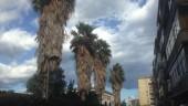"""Interventi potatura alberi nel quartiere di Monte Po'. Consigliere Giusti esasperato: """"Nessuno interviene"""". LE FOTO"""