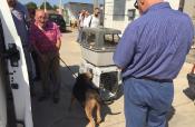 Vittoria: smantellato ultimo recinto abusivo, 30 cani messi in sicurezza