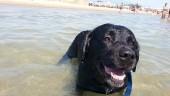 A mare con Fido? Si può! Spiaggia per cani a Catania alla playa