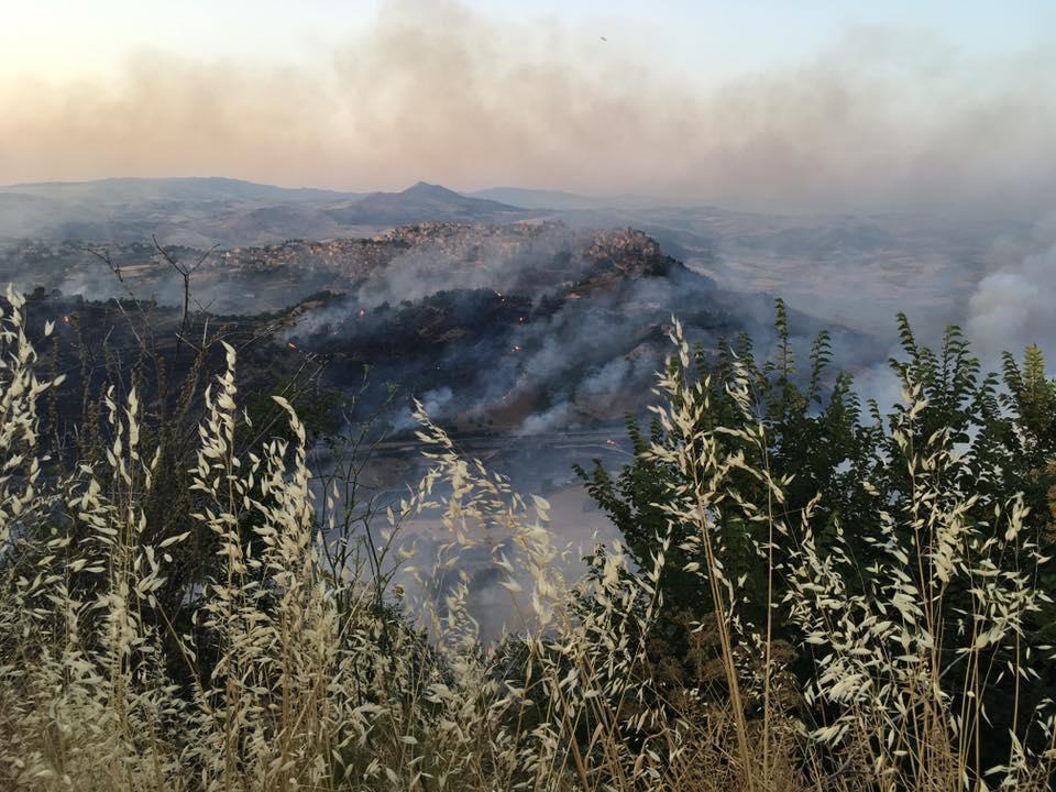 Incendi: Sicilia brucia, aree Ennese in cenere e animali morti