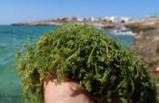 """Emergenza specie 'aliene' nel Mediterraneo: """"È il bacino più colpito"""""""
