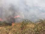 Incendi in Sicilia 1