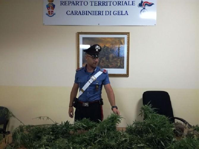 I carabinieri. Mille cannabis con un drone