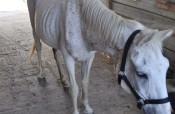 Cavalli malnutriti e maltrattati nel catanese. Salvati dalla scientifica e dai tecnici dell'Asp. LE FOTO