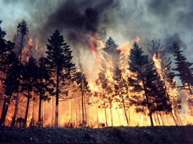 boschi fuoco